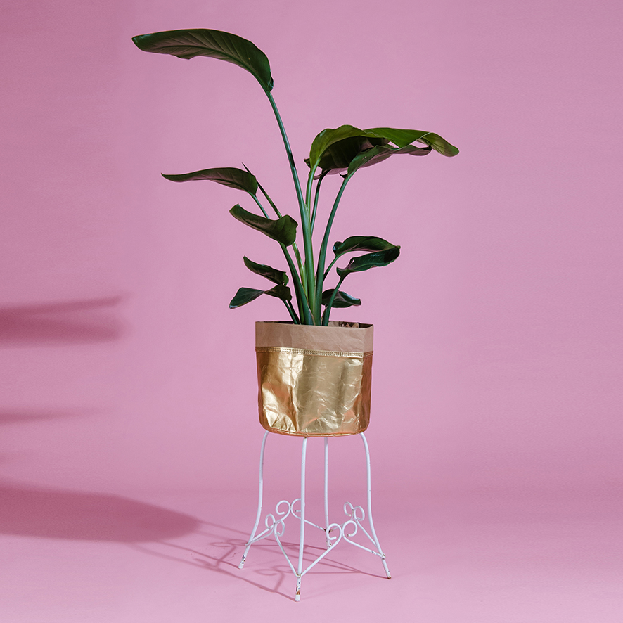 Plant One On Me Plant Stand-2-PT038